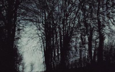 Les arbres sont des marcheurs lents