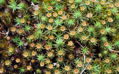 mousses et lichen